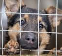 В Туле открыли пункт сбора помощи бездомным животным