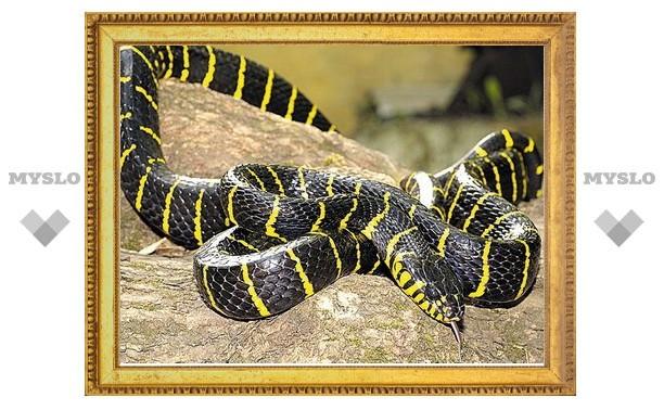 Тульских мужчин поздравят змеи и еноты