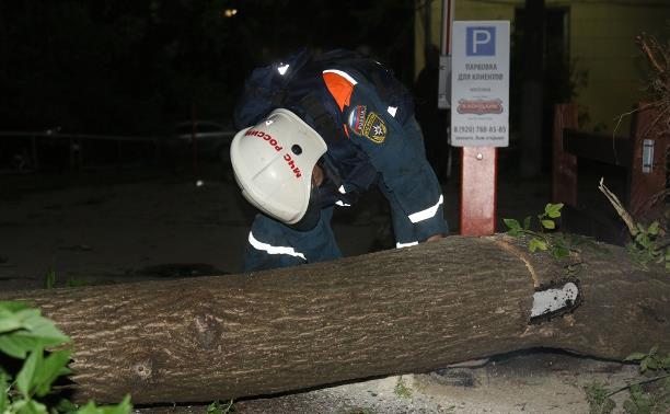 С улиц Тулы убрали почти 200 поваленных деревьев