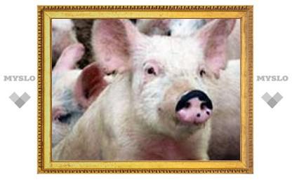 Зараженные свиньи разносят гепатит Е по Европе