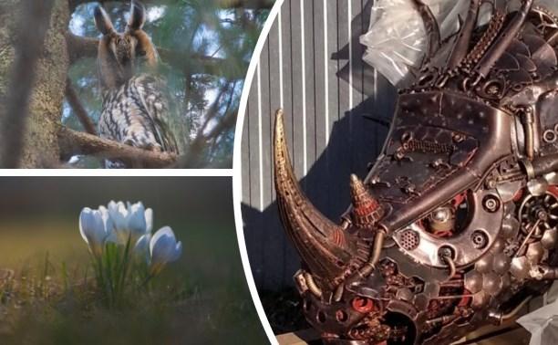 Антипаника от читателей Myslo: носорожка стим-панк, ушастая сова и весенние цветы