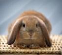 В России предложили запретить тестировать косметику на животных