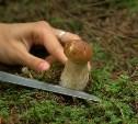 В Кимовском районе полицейские отыскали потерявшихся грибников