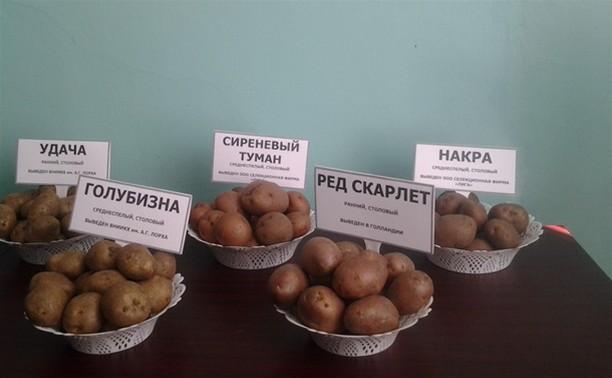 Тульская область может производить картофельные чипсы