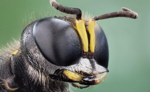 Жителя Ярославля в Узловой до смерти искусали осы