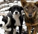 Собаки в городе: как избавиться от бездомных и где выгуливать домашних?