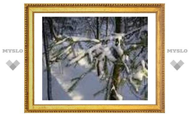 Наконец в Тулу пришла настоящая зима