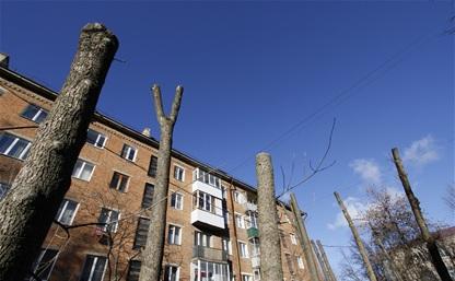 В Туле обкорнали деревья. Варварски или «по науке»?
