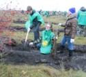 На Куликовом поле высадили аллею из 8000 деревьев