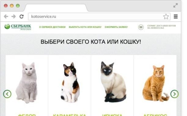 Сбербанк запустил сервис доставки котов на новоселье
