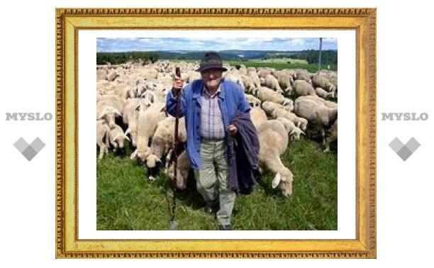 11 ноября: День пастухов