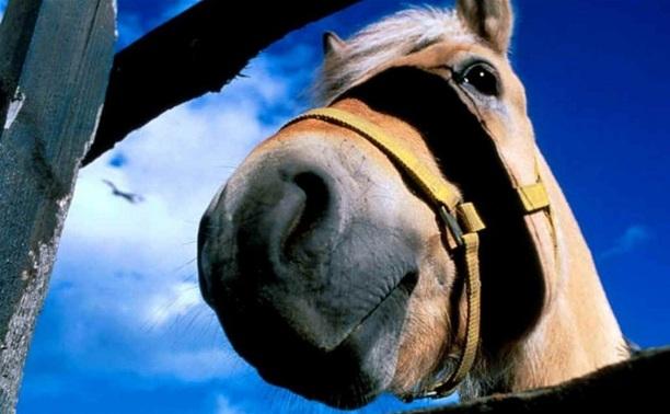 Попал под лошадь