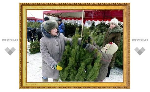 Где в Туле купить елку?