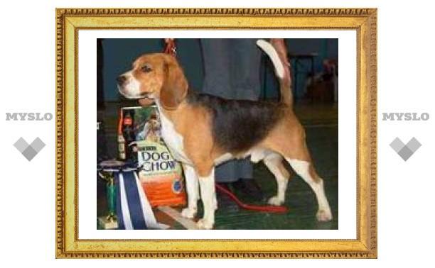 Завтра в Туле пройдет выставка собак