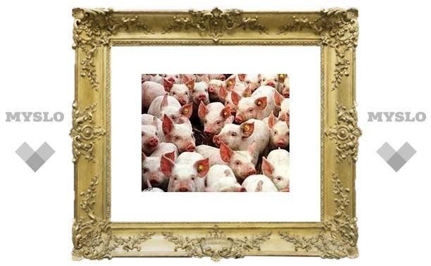 Эпидемия свиного гриппа идет на Тулу?