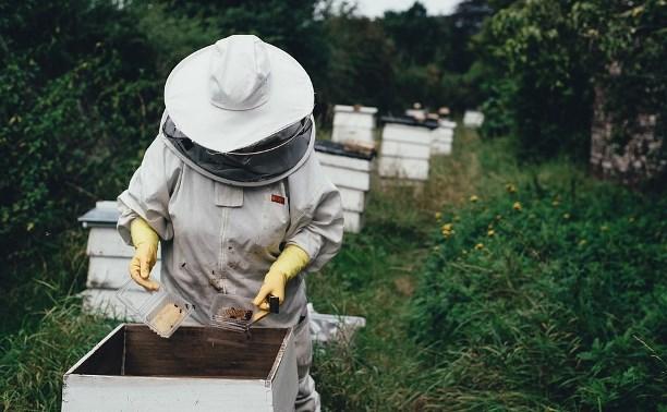 Названа причина массовой гибели пчел в России