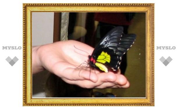 В Туле открылась выставка редких насекомых