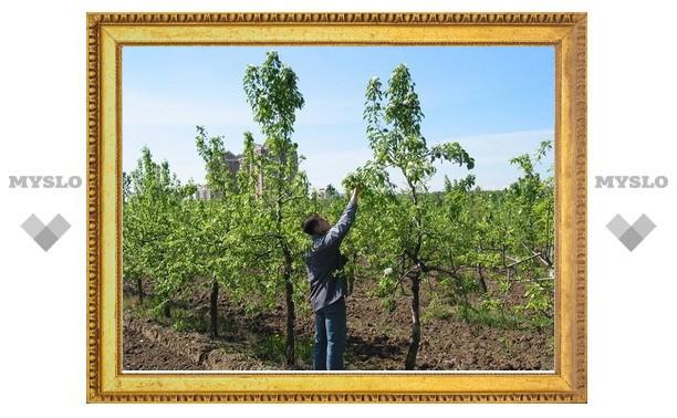 Где в Туле купить плодовые деревья со скидкой?