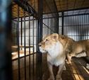 Туляк выступил с предложением построить в Туле зоопарк