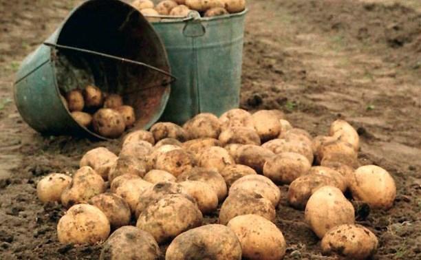 В Суворове двое рецидивистов украли 10 кг картошки