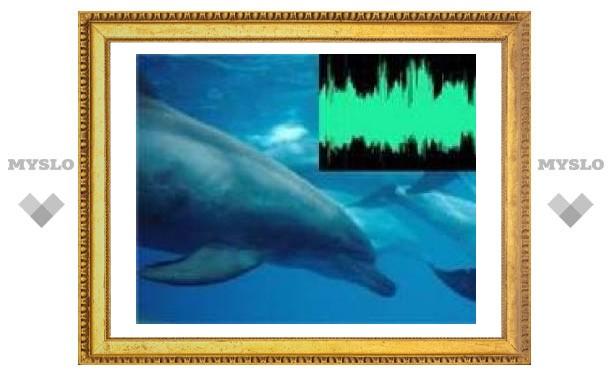 Компьютер научился узнавать дельфинов по голосу