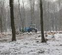 Вырубка ясеня в Центральном парке Тулы: Законно ли рубят деревья?