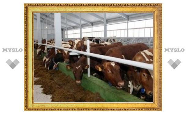 На предприятии в Тульской области животные больны туберкулезом