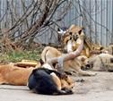 В Туле начали действовать новые правила по отлову бездомных собак