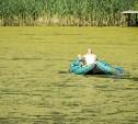 Почему пляж в Петушках стал похож на болото?