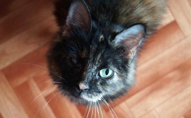 Кошачий концлагерь в Туле: волонтеры спасли 30 кошек из ужасной квартиры