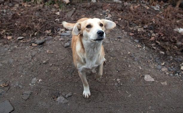 В Туле пройдёт благотворительная ярмарка в помощь бездомным животным