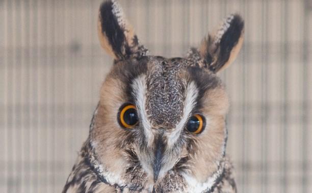 «Слобода» и Myslo взяли под опеку сову из зооуголка Центрального парка