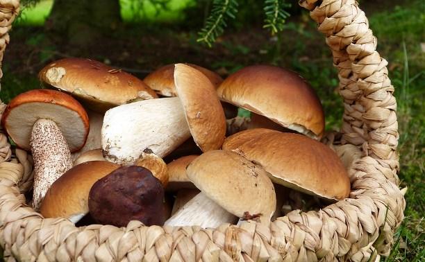 Минсельхоз хочет регулировать сбор грибов и диких ягод