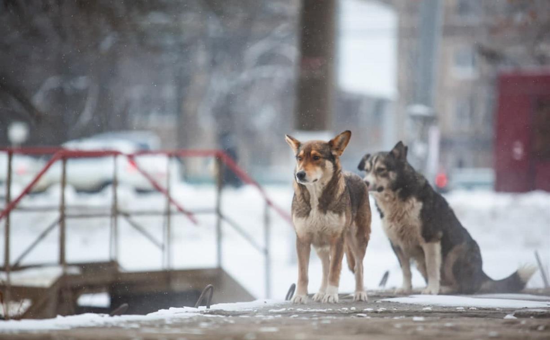 Погода в Туле 19 января: облачно, снежно и холодно