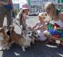 В Центральном парке Тулы прошёл фестиваль помощи животным