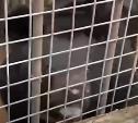 Медведей из зоопарка «мытищинского стрелка» перевезут в Тульскую область