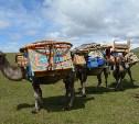 Костяные стрелы, кочевники и Вал Чингисхана: Тульские путешественники побывали на Монгольском Алтае