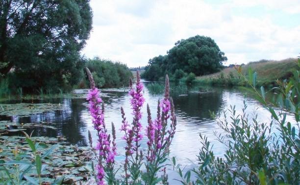 В Тульской области появились новые памятники природы