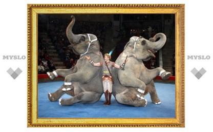 Тулякам раскрыли тайну слоновьего педикюра!