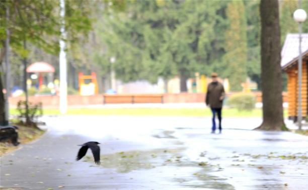 На один день в тульский регион вернется аномальное тепло