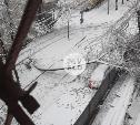 Последствия непогоды: туляки сообщают об упавших деревьях, столбах, разбитых авто и пробках на дорогах