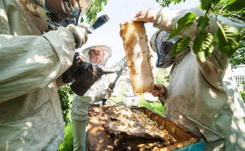 В Туле состоится собрание пчеловодов, пострадавших от массовой гибели пчёл