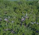 Детский сад в кронах: на Куликовом поле серые цапли выводят птенцов