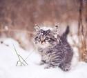 В Туле 25 декабря  обещают снег и легкий морозец