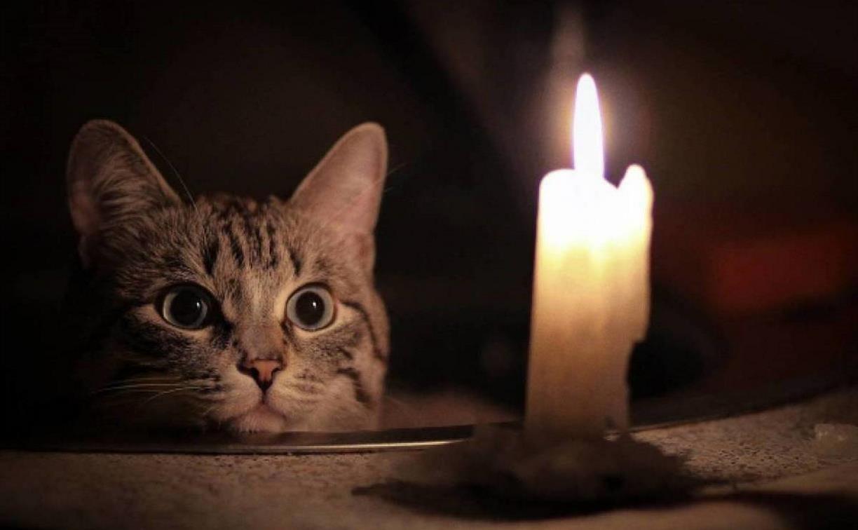 Где в Туле не будет света 21 января