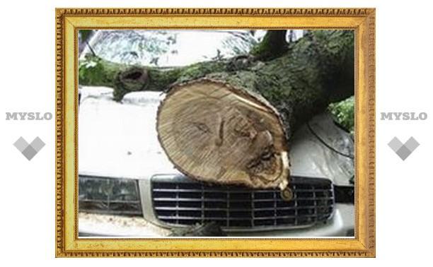 Под Тулой на водителя упало дерево