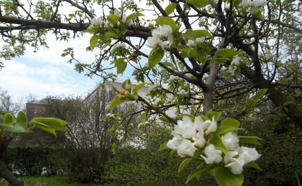 Первая майская неделя в Туле будет тёплой