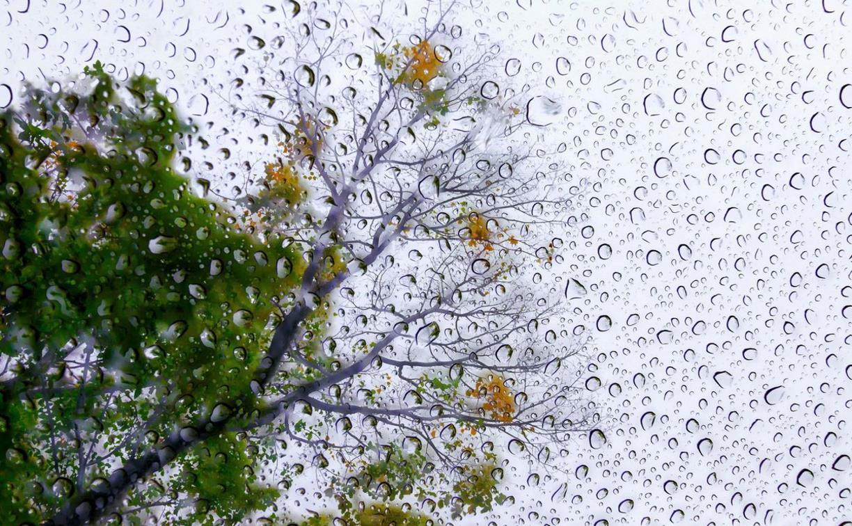 В субботу и воскресенье в Тульской области будет дождливо и прохладно