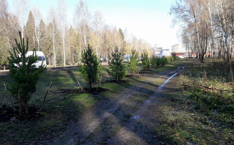 В Новомосковске высадили 100 сосен