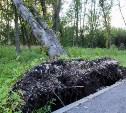 В Баташевском саду ветер вырвал с корнем вековые деревья
